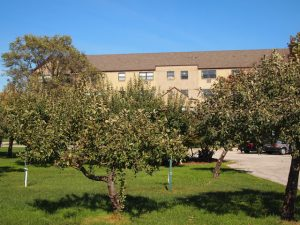 CJC.FruitTrees.Three